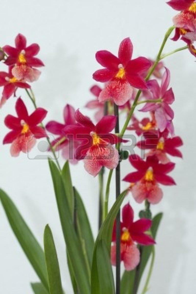 orchidee. Black Bedroom Furniture Sets. Home Design Ideas