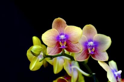 coltivare-orchidee_O1