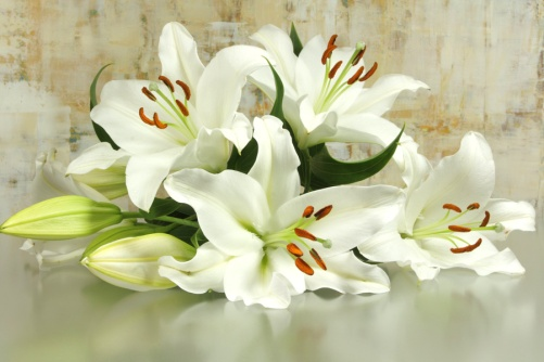 rouwbloemen-leliesbegrafenis-uitvaart