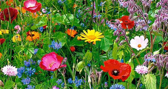 wilde-bloemen-border1