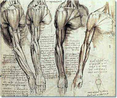 Fig_1_leonardo-da-vinci-anatomy_4_000