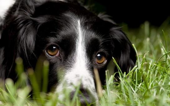 hd-honden-wallpaper-portret-foto-van-een-zwarte-hond-met-bruine-ogen-op-het-gras-achtergrond-foto