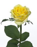 tara_HR_4_tcm53-140929 kleinbl