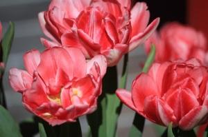 2012-04-30 Velo Floriade (30) opstaan