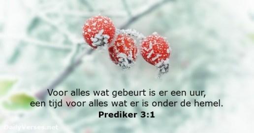 prediker-3-1