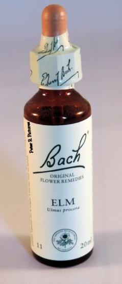 bach-bloesem-remedie-nr_-11-elm-_-veld-iep_83_0