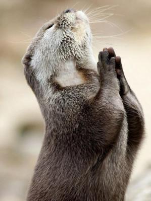 otter-aan-het-bidden1