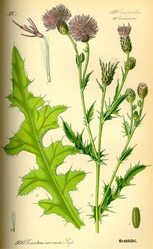 flora-g