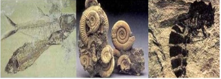 Radiometrische dating menselijke fossielen Layton dating