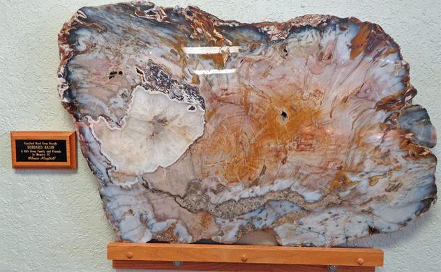 methodes van het dateren van rotsen en fossielen